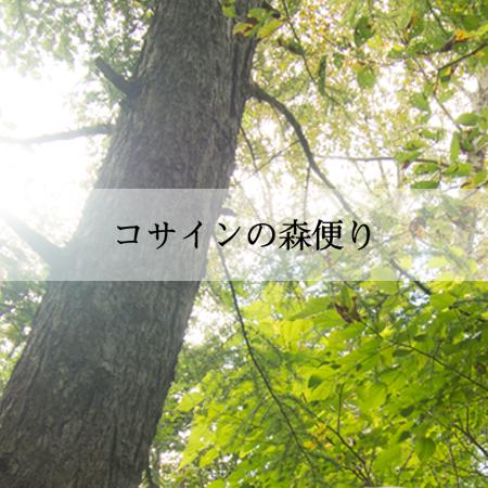 コサインの森便り Spring 2019