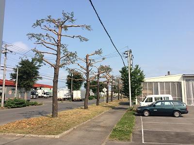 長く大切に使える木の生活道具