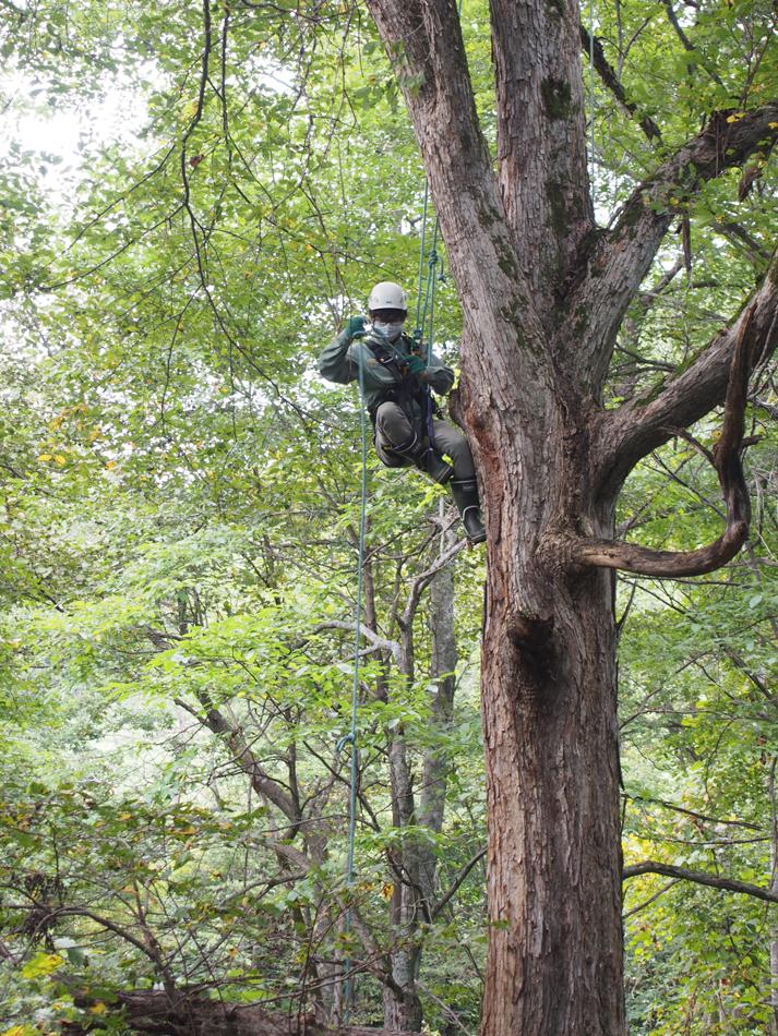 コサインの森便り Autumn 2020